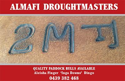 Almafi Droughtmasters