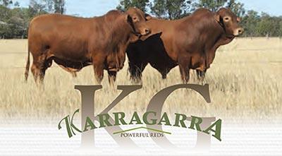 Karragarra Droughtmasters